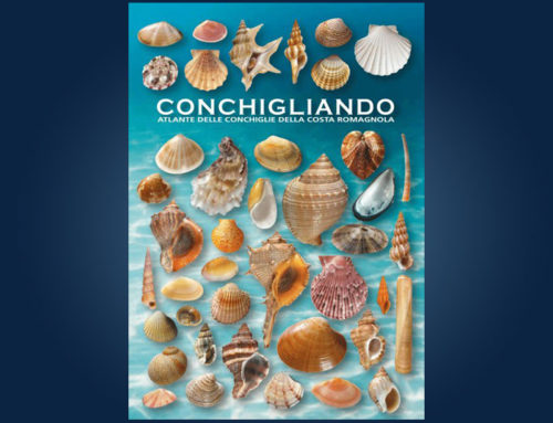 Conchigliando. Atlante delle conchiglie della costa romagnola